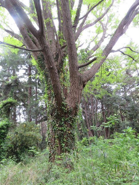 小石川植物園30