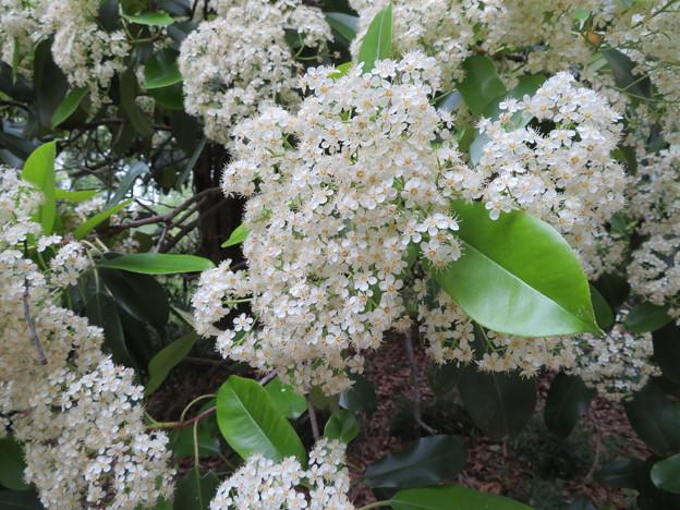 小石川植物園26