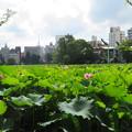 Photos: 不忍池15