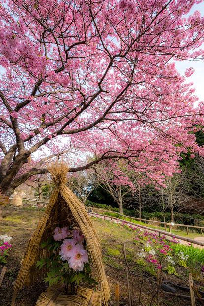白野江植物公園♪