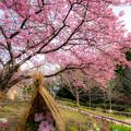 Photos: 白野江植物公園♪