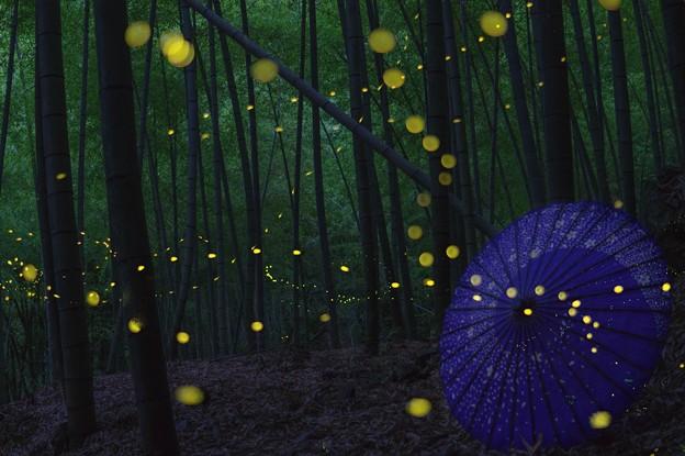 竹林のヒメボタル♪