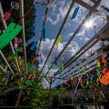 Photos: 千鶴寺の風鈴まつり♪