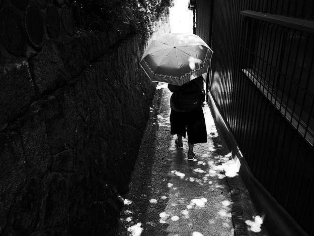 Photos: 尾道・林文美子の日?