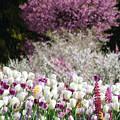 桜と桃とチューリップ
