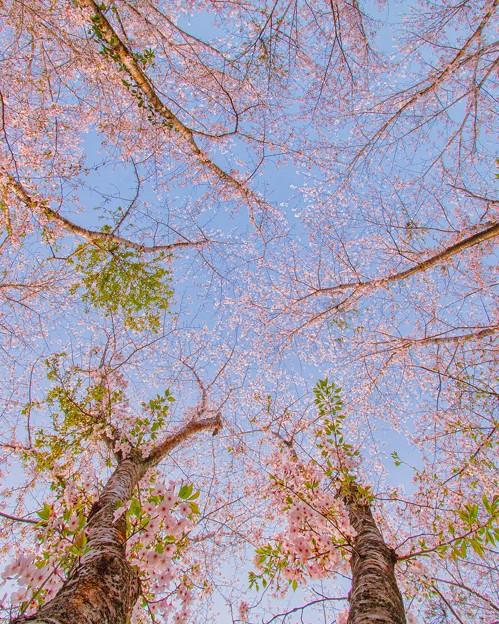 散る花・抜ける空
