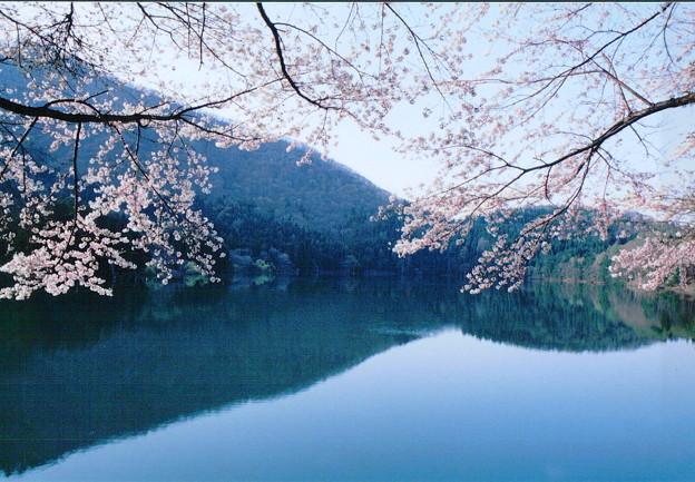 「飯山市北竜湖の春」