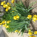 花壇に咲いた花
