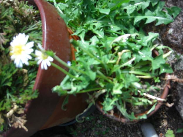 花壇に花が咲いている