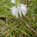 湿原に咲いた花