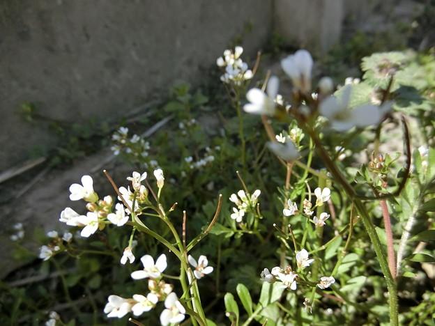野の花。。♪...