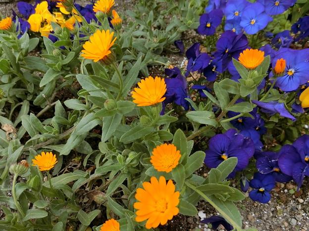 げんきなお花ですね.....♪♪~