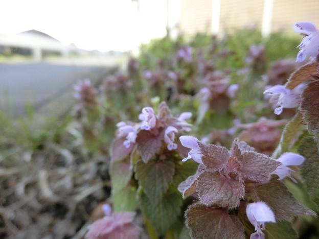 野の花♪~