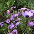 Photos: よく咲きます♪♪~
