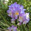 Photos: 春の~はな♪