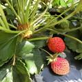 Photos: 家庭菜園
