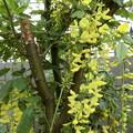 Photos: これは~^0^木です♪