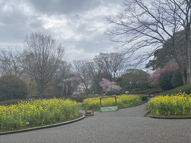 2021.3.20 福岡市植物園1