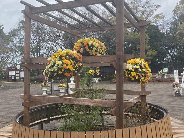2021.3.20 福岡市植物園2
