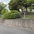 Photos: 2021.5.13 公園の剪定と落葉掃き