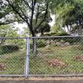 Photos: 2021.5.12 公園の枯葉