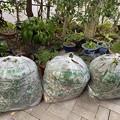 2021.10.20 公園の躑躅の剪定ゴミ