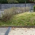 2021.10.20 公園のフェンス際の剪定4