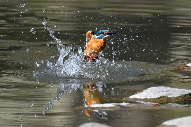 Photos: 水浴び3