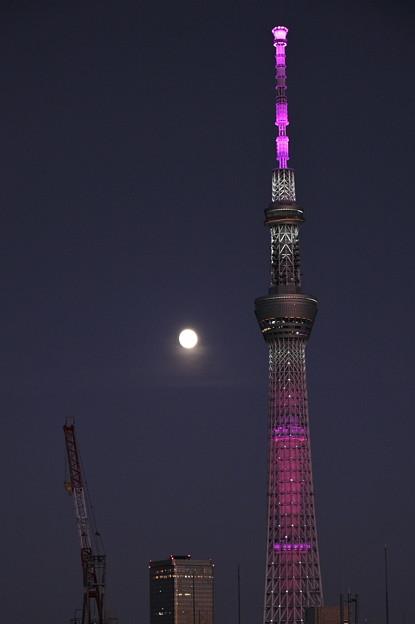 Photos: 十三夜