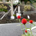 Photos: 道端に咲く花