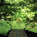 Photos: 小山田緑地公園