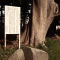 Photos: 965 八幡太郎 手割りの石