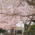 Photos: 786 とざわ第1児童公園