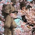 260 日高交流センターの桜