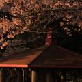 東平霊園の桜
