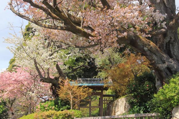 319 本宮の保存林