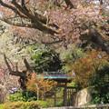本宮の保存林
