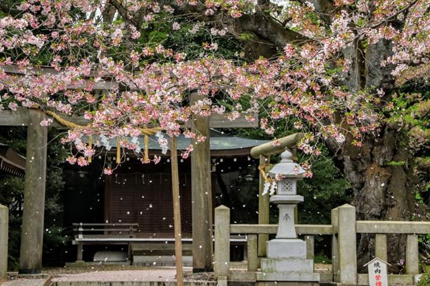 熊野神社 日立市