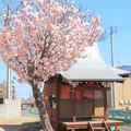 Photos: 854 金沢子安地蔵尊