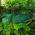 622 日立の神の子池 富士権現下の青い池