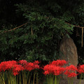 Photos: 857 東金沢の天道大日如来碑