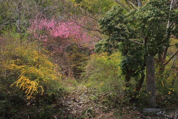386 本山の厳島神社