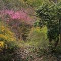 Photos: 386 本山の厳島神社