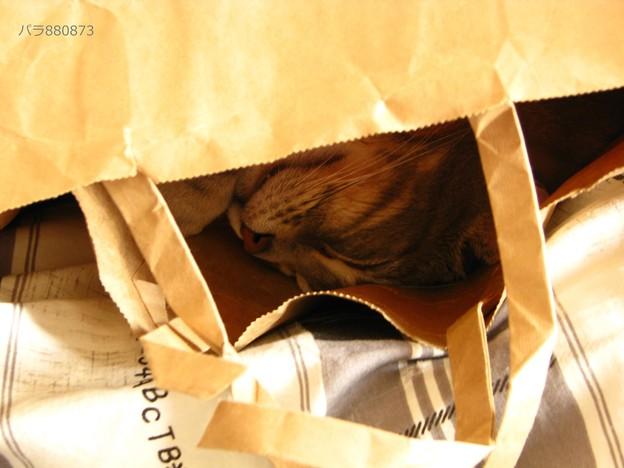 紙袋で眠る美憂ちゃん♪