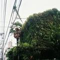 Photos: 植物を纏う