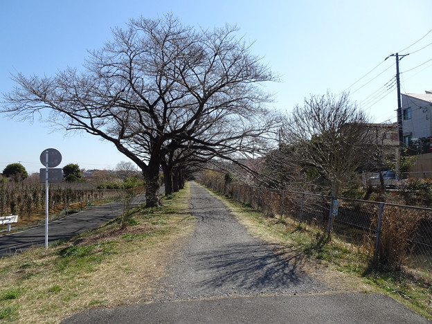 Photos: 見沼代用水西縁の路