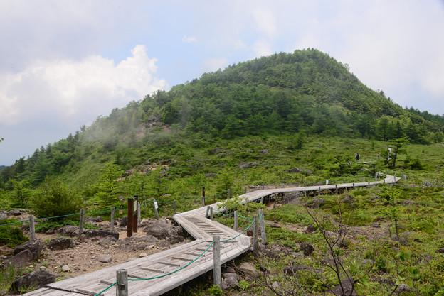 池の平湿原の遊歩木道