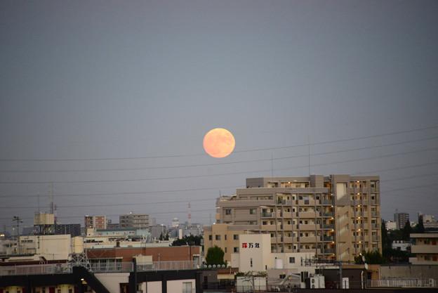 Photos: ほぼ中秋の名月