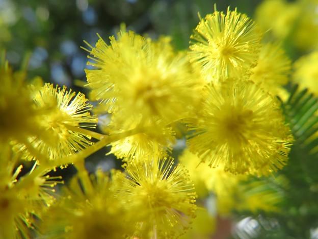黄色が華やか