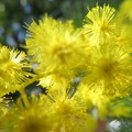 Photos: 黄色が華やか